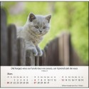 """Calendrier """"Chats"""" 2022"""